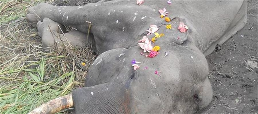 Male Elephant passed away while crossing electrocuted fence